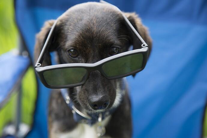 dog-with-glasses-14964206317jK